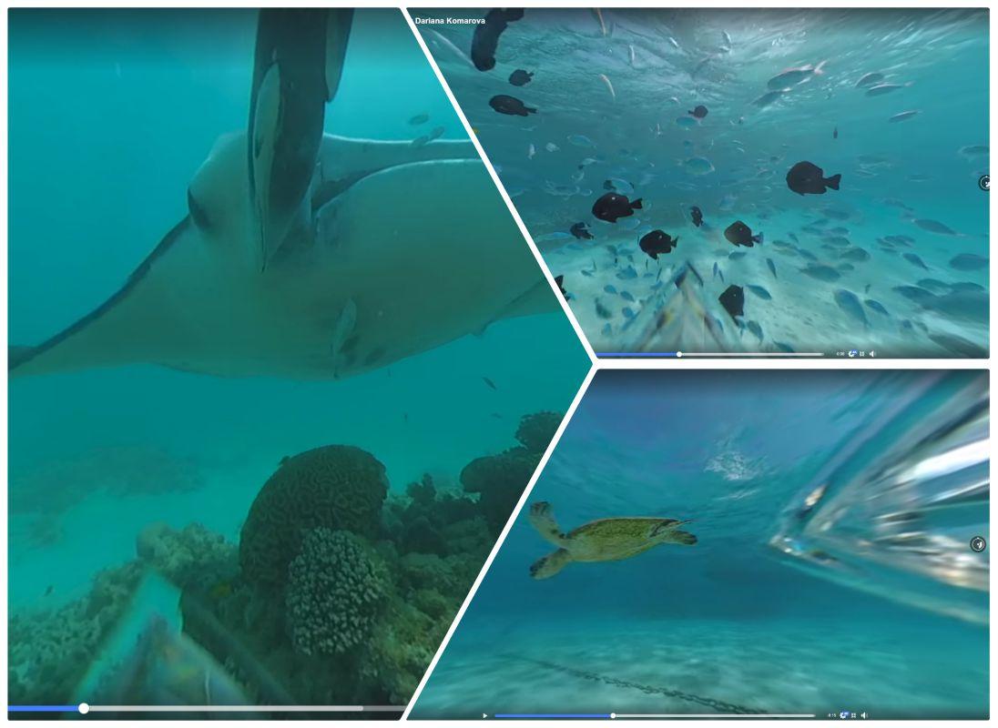 Insta360 One X new underwater sample videos